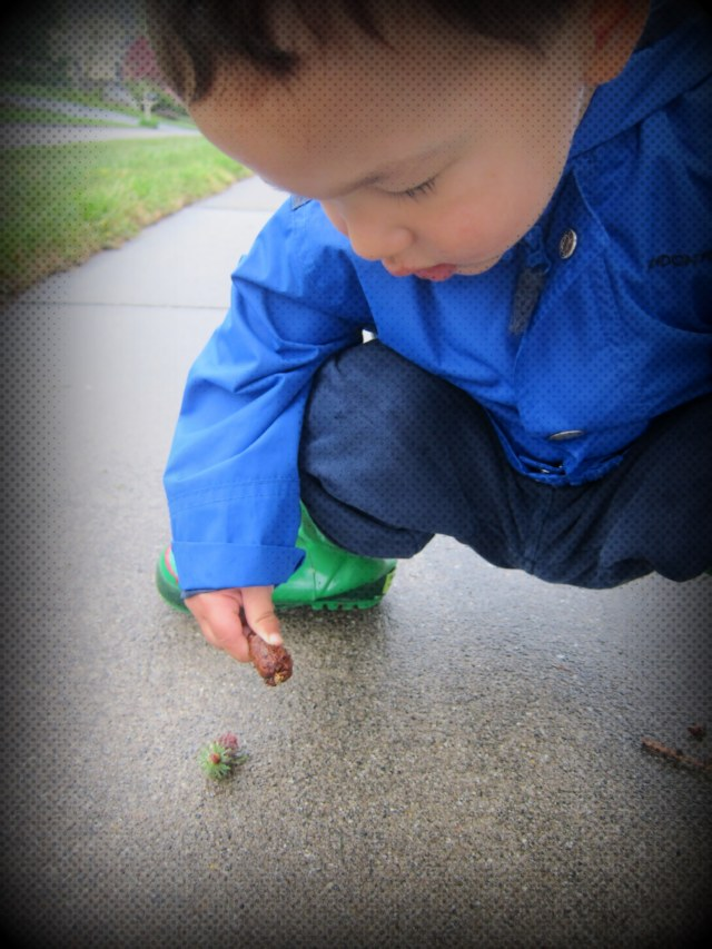 He investigated two pine cones on the sidewalk.  No hidden messages were inside or beneath the pine cones.